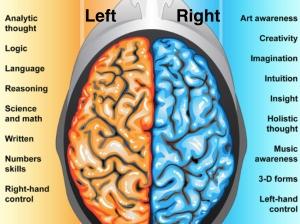 Left brain.001